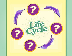 Life Cycle screenshot