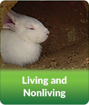 Living and Nonliving Modules